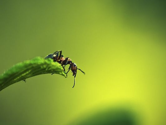 click to free download the wallpaper--Green and Protective Wallpaper, Ant on Grass, Much Enlarged, It is Easy to Apply