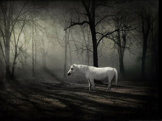 click to free download the wallpaper--HD Animals Wallpaper - The Last Unicorn Among Misty Forest