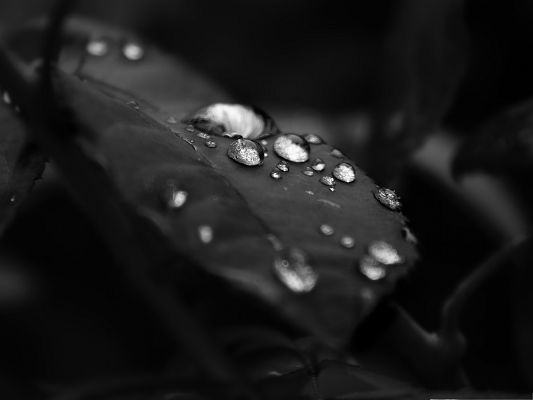 click to free download the wallpaper--HD Water Drops Wallpaper, Beautiful Drops of Water On the Leaf