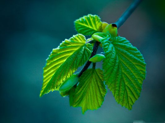 HD Wide Wallpaper, Green Leaves Offspring, New Spring Has Come