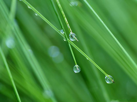 click to free download the wallpaper--HD Wide Wallpaper, Water Drops on Green Grass, Nice and Fresh Landscape