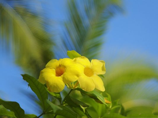 click to free download the wallpaper--Hawaiian Flowers Image, Tiny Flower in Bloom, Under the Blue Sky