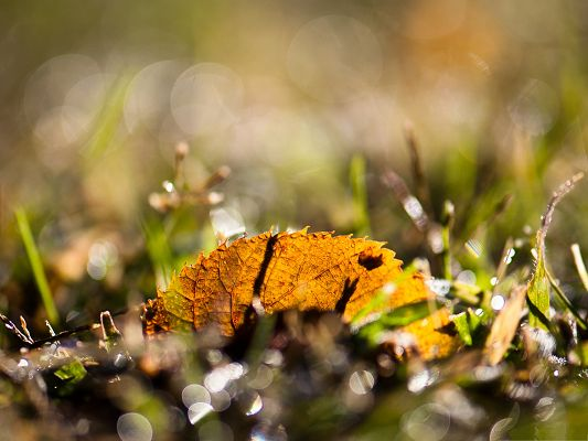 click to free download the wallpaper--High Quality 0Wallpapers for Computer, Fallen Leaf Bokeh, Autumn Landscape