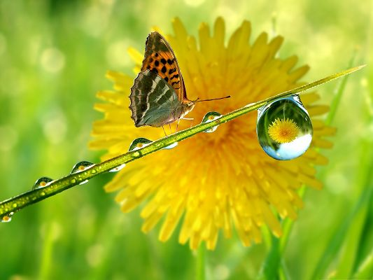 click to free download the wallpaper--High Quality Animals Wallpaper, Orange Butterfly on Green Plant, Nice Flower Reflection