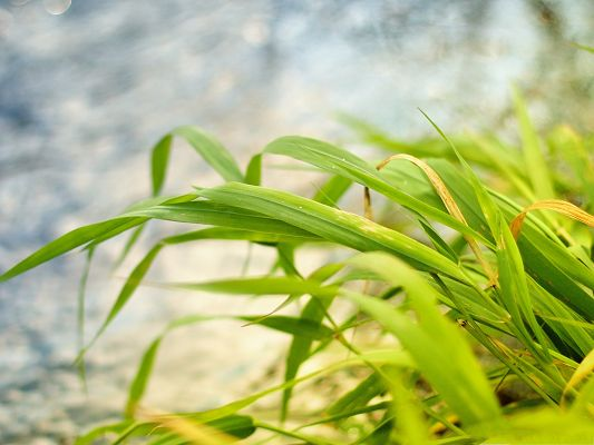 click to free download the wallpaper--High Quality Wallpaper for Computer, Summer Grass Bokeh, Green and Nice in Look