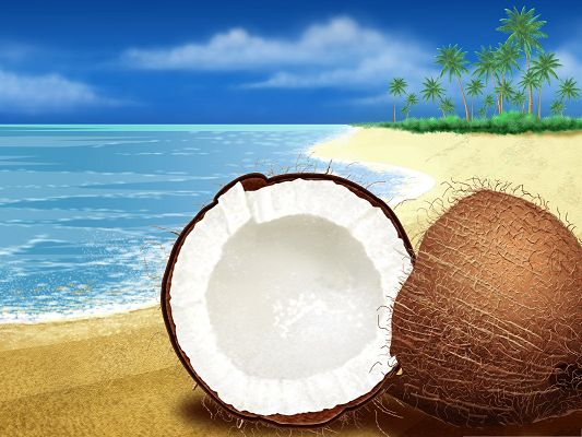 click to free download the wallpaper--High Quality Wallpaper for Widescreen, Exotic Coconut On the Beach