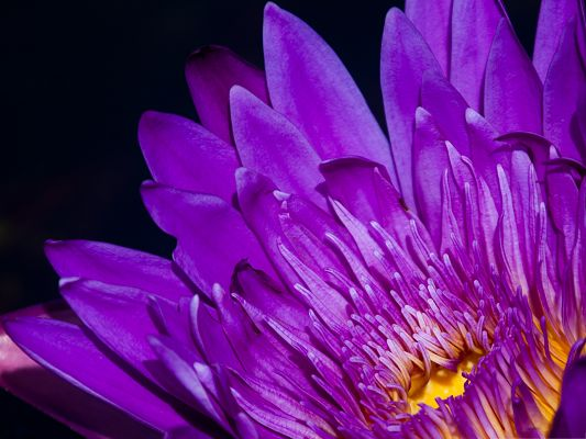 click to free download the wallpaper--High Quality Wallpapers and Backgrounds, Purple Flower in Bloom, with Straight Lines