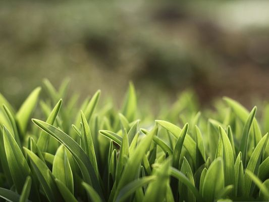 click to free download the wallpaper--High Resolution Wallpapers, Green Grass Under Macro Focus, Feel Fresh and Clean
