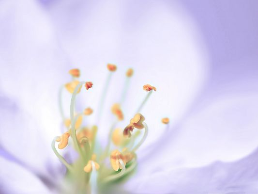 click to free download the wallpaper--High Resolution Wallpapers, Light Lilac Flowers, Bloom in Beauty