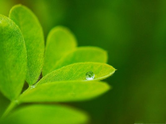 High Resolution Wallpapers, Lone Water Drop, Welcome to the Green World