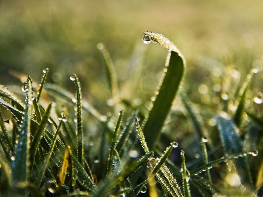 click to free download the wallpaper--High Resolution Wallpapers, Morning Dew Under Macro Focus, Amazing Look