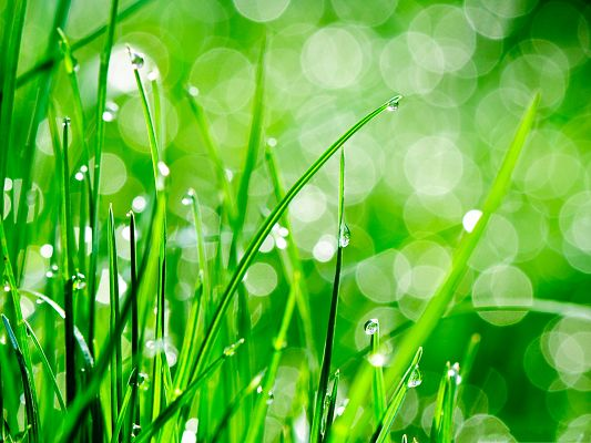 High Resolution Wallpapers, Water Drops On Grass, Clear and Fresh Landscape