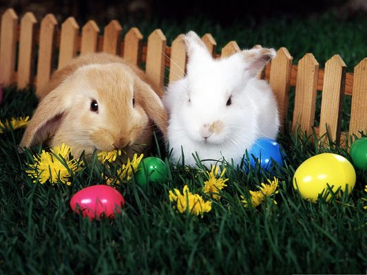 click to free download the wallpaper--Holiday Wallpapers, Rabbits Doing Easter Egg Hunt