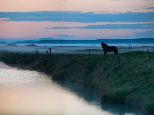 click to free download the wallpaper--Horse in Nature Landscape, Lonely Horse Among Wild Nature, Run Far and Free