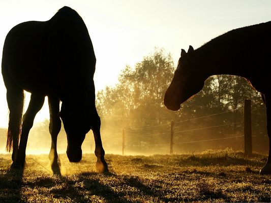 click to free download the wallpaper--Horses Image - Tall Backlit Horses, Thick and Golden Smoke Around Them