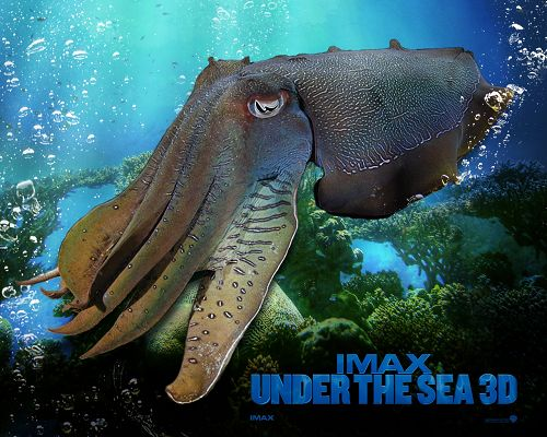 click to free download the wallpaper--IMAX Under The Sea Post in 1280x1024 Pixel, Big Fish is Taking a Rest, Is There Someone Who Can Catch Him? - TV & Movies Post
