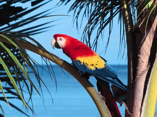 click to free download the wallpaper--Image of Birds, Parrot in Light Color, Standing on Coconut Trees