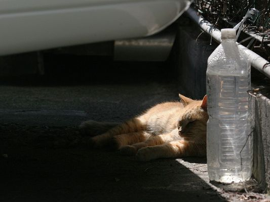 click to free download the wallpaper--Image of City Cats, Homeless Kitten, Stay Under the Car to Keep Warm