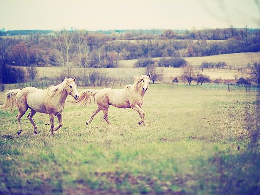 click to free download the wallpaper--Image of Cute Animals, Two Horses Running Free, Shall Never Make a Departure