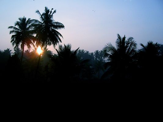 click to free download the wallpaper--Image of Natural Landscape, Palm Trees Under the Setting Sun, Nice-Looking and Peaceful