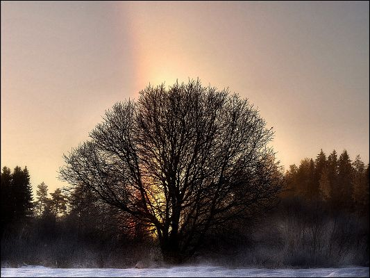 Image of Natural Landscape, Rainbow Over the Tree, Bright and Impressive Scenery