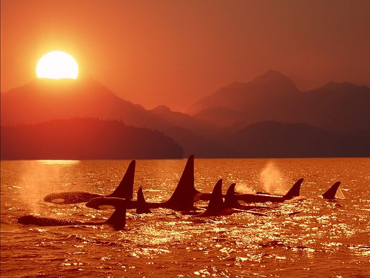 Image of Nature Landscape, the Setting Sun, Sharks in Free Swim, High Mountains
