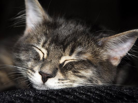 Image of Sleeping Cats, Kitten Lying on Black Blanket, Sound Sleep