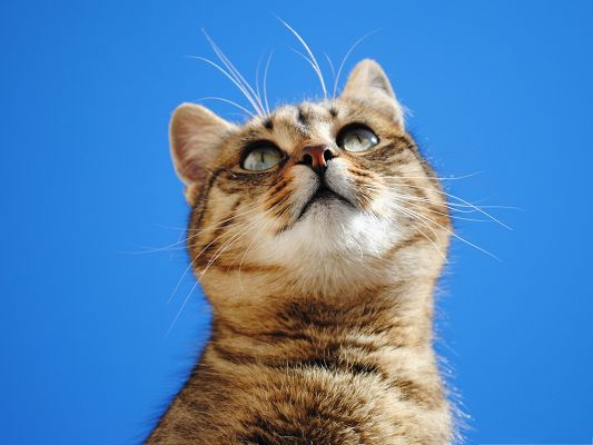 Images of Cute Cat, Kitten in the Blue Sky, Looking Up High
