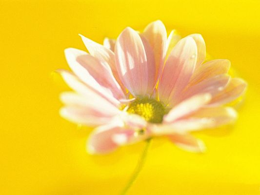 click to free download the wallpaper--Images of Flower Art, Blooming Pink Flower Under Micro Focus