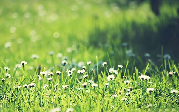 click to free download the wallpaper--Images of Flower Art, Green White Grassland, Happy in Smile