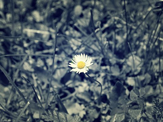 click to free download the wallpaper--Images of Little Flower, Small and White Flower, Shall Strike a Deep Impression