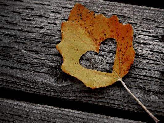 click to free download the wallpaper--Images of Natural Landscape, a Lovely Leaf Falling, Feel Loved