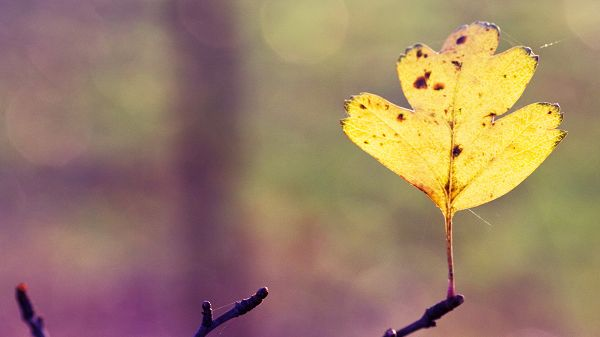 Images of Natural Plants - A Yellow Leaf Standing on a Branch, Mere Background, is Impressive Scene
