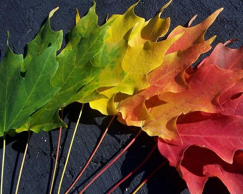 Images of Natural Scene, Autumn Spectrum, the Changing of Leaves' Color