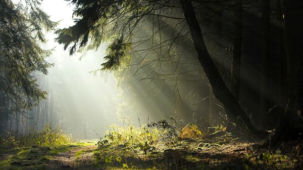 Images of Natural Scene - Sunlight Pouring in the Forest, It is Another Fine Day, Just Enjoy!