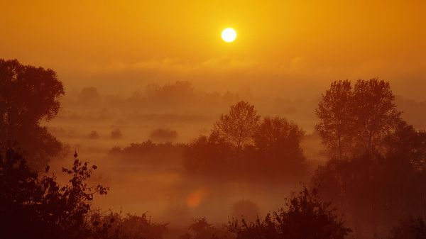 Images of Natural Scene - The Rising Sun, Scene is Bright and Golden, Tall Trees, Amazing Scenery