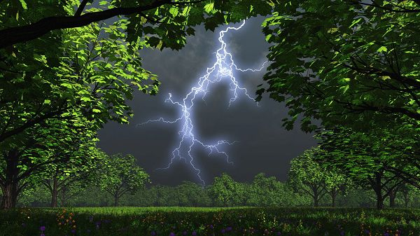 click to free download the wallpaper--Images of Natural Scenery - Green and Prosperous Plants, a Lightning Shown, Typical Summer Scene