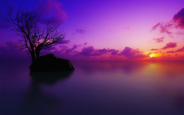 Images of Natural Scenery - Sun Set Maldives in Pixel of 1920x1200, the Rising Sun and a Tall Black Tree, Romantic Scene