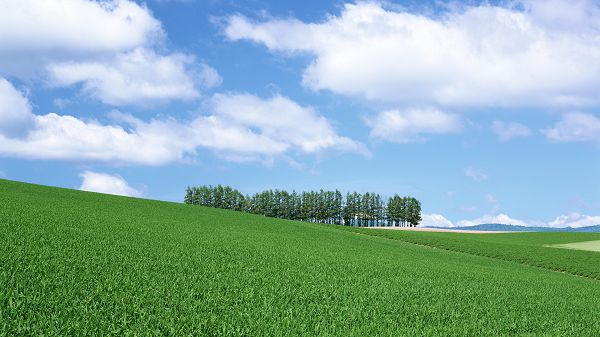 Images of Natural Scenes - A Full Eye of Green Scene, Seemingly Endless, the Blue Sky