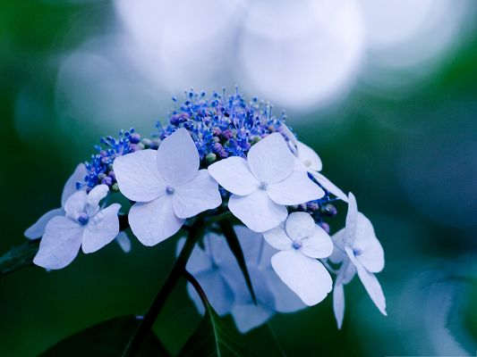 click to free download the wallpaper--Images of White Flowers, Tiny Flowers in Bloom, Incredible Look