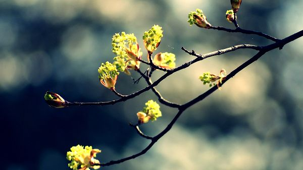 click to free download the wallpaper---Including a Branch of the Tree, Full of Flowers, Mere and Black Background - HD Natural Scenery Wallpaper