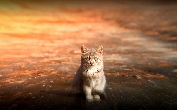 Indifferent to Exterior Conditions, Peaceful and Quiet Facial Expression Remains - Widescreen and HD Kitty Wallpaper