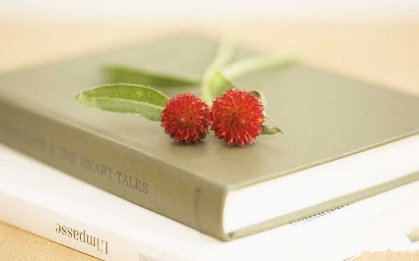click to free download the wallpaper--Interior Flowers Show, Red Flower in Pairs, Two Books Beneath