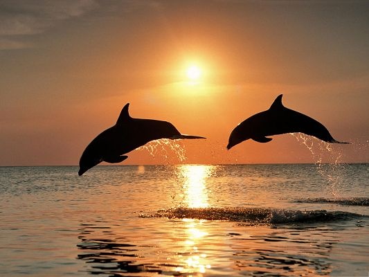Jumping Dolphin Image, the Dolphins Are Attracted by Nature Landscape, Want to be Out to Enjoy