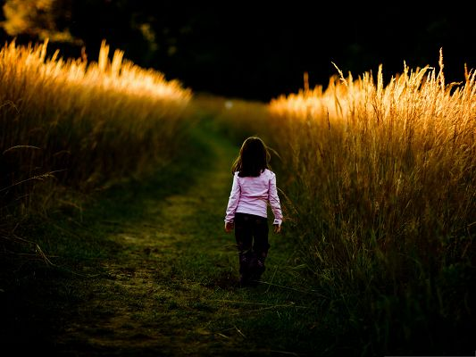 click to free download the wallpaper--Kid in Nature, Little Girl Walks in Nature, Brown Wheats Alongside