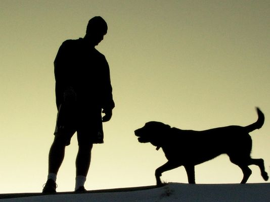 click to free download the wallpaper--Labrador Retriever Silhouette