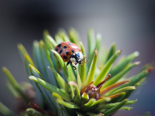click to free download the wallpaper--Ladybug and Green Plants, Tiny Insect on Plant, Amazing in Look
