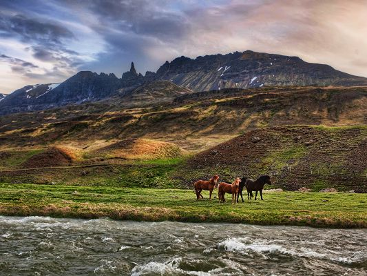 click to free download the wallpaper--Landscape in Iceland, Three Horses in Nature, the Twisting Sea