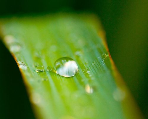 click to free download the wallpaper--Leaves and Nature, Green Leaf After the Rain, Crystal Clear Waterdrop