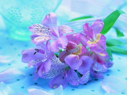click to free download the wallpaper--Light Purple Flowers Image, Little Flowers in Bloom, Green Leaves Around